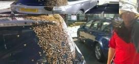 جيش من النحل يطارد سيارة ليومين متتاليين لإنقاذ ملكتهم