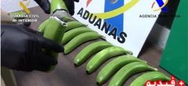 الشرطة الإسبانية تعثر على 17 كلغ من الكوكايين مخبأة داخل ثمار الموز