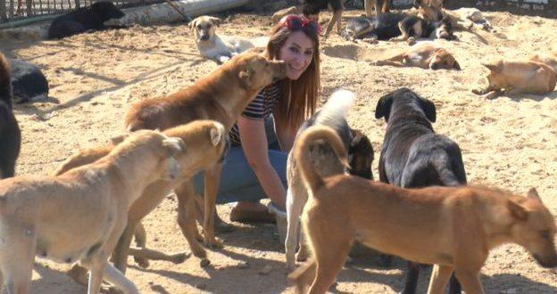 جدل في مصر بشأن تصدير القطط والكلاب